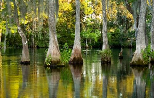 The Rainbow River  Dunnellon, FL