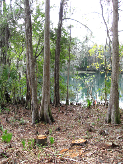 essay17-2 DUnnellon, FL on the Rainbow River