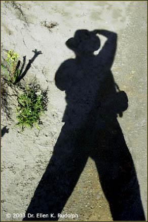 Dr. Ellen's Shadow